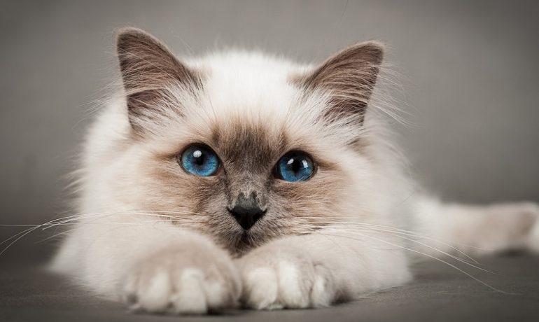 Te contamos cuál es la mejor golosina para gatos