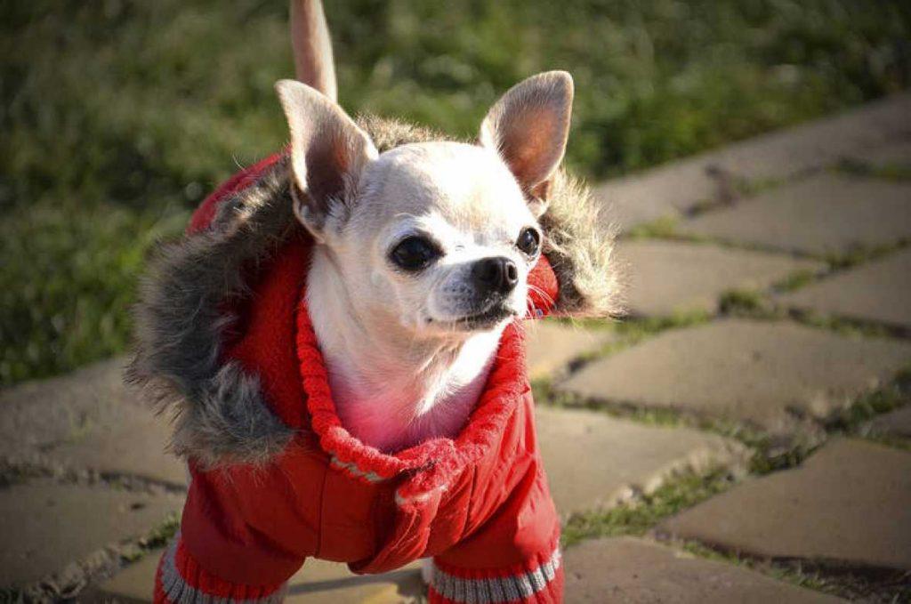 La ropa para perros les da ventajas a nuestras mascotas