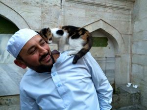 gatos callejeros mezquita