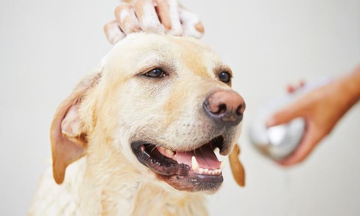 No dejes solo a tu perro durante largos periodos de tiempo
