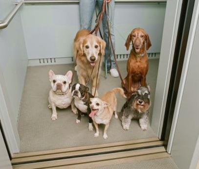 Normas a seguir si tienes mascota en una comunidad de vecinos