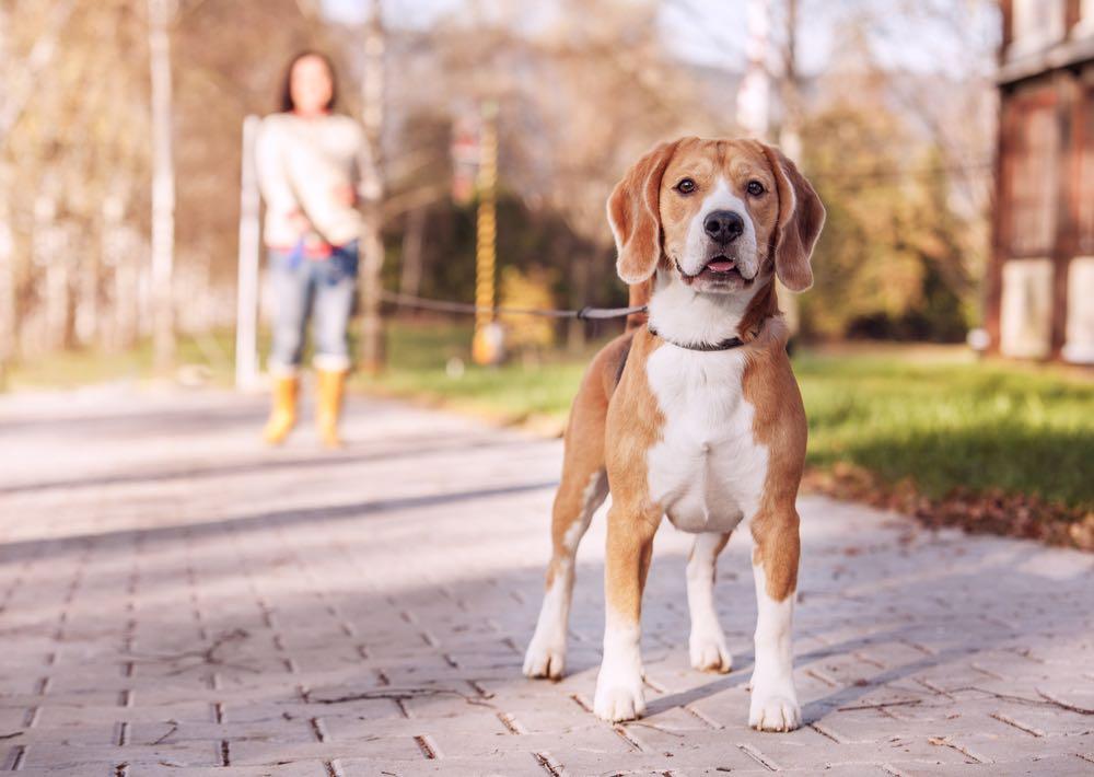 Pasea a tu perro con correa