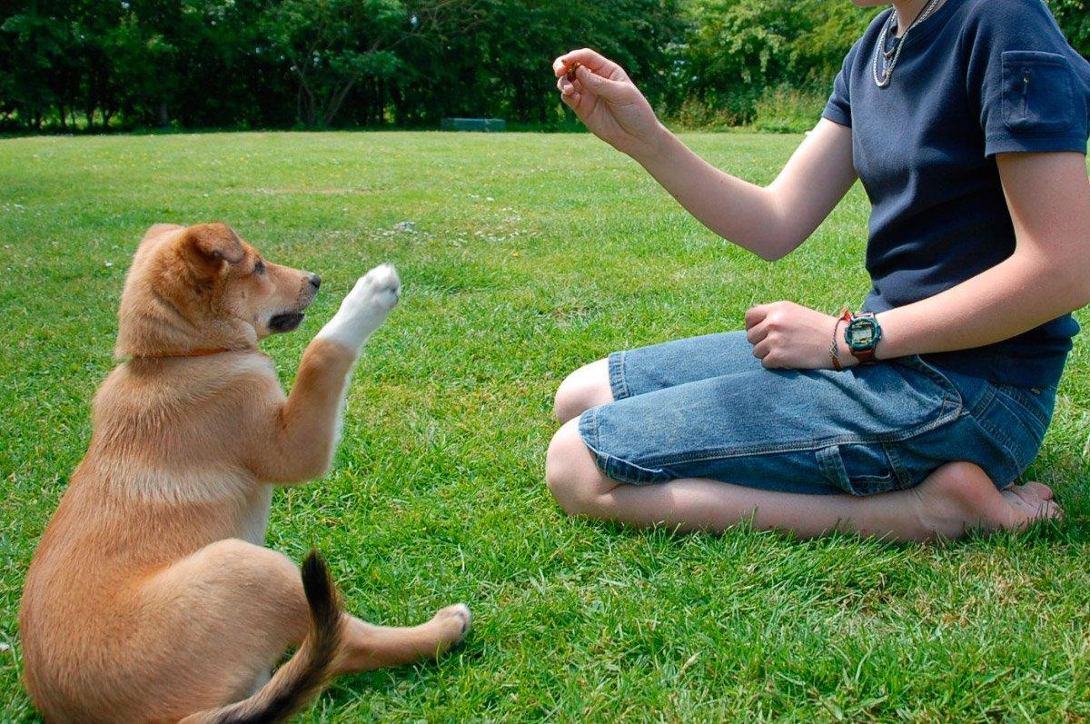 Resultado de imagen para entrenar perros