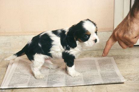 Pasos para entrenar a tu perro