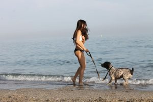 perro de agua playa