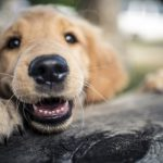 perro ser sensible