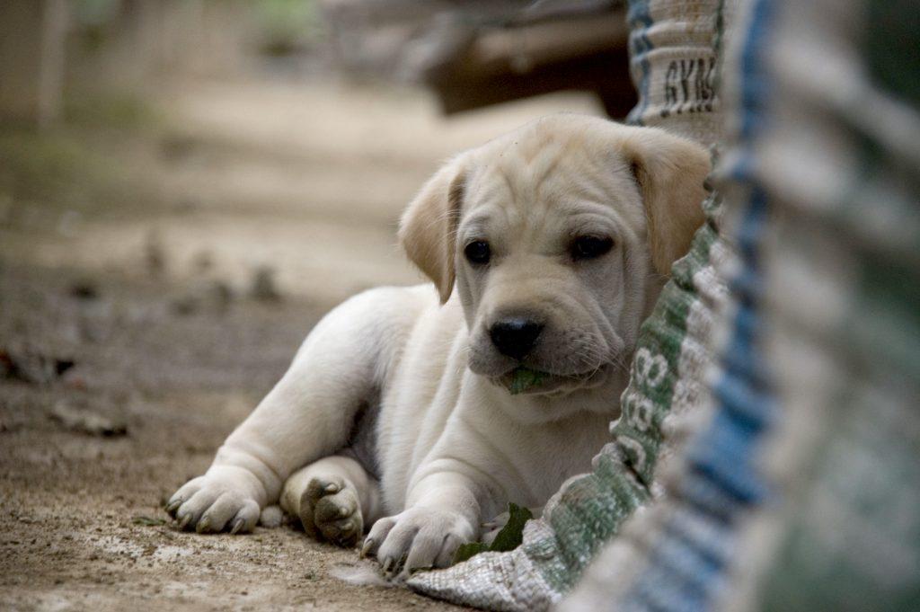 perros abandonados en argentina