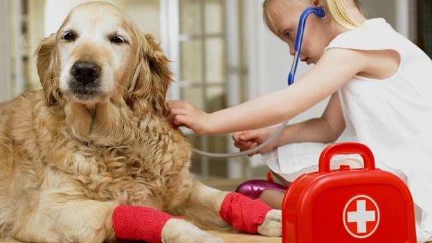 Por qué es importante tener un maletín de primeros auxilios para mascotas