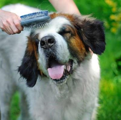 por-que-mi-mascota-esta-perdiendo-pelo