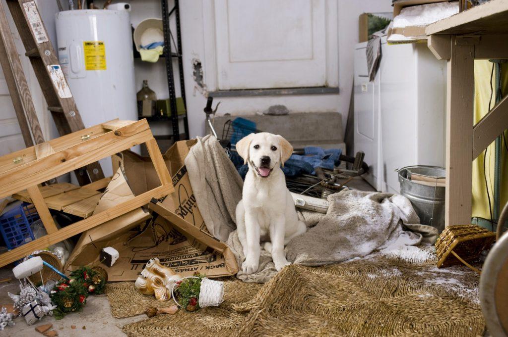 Por qué mi perro destroza la casa cuando se queda solo