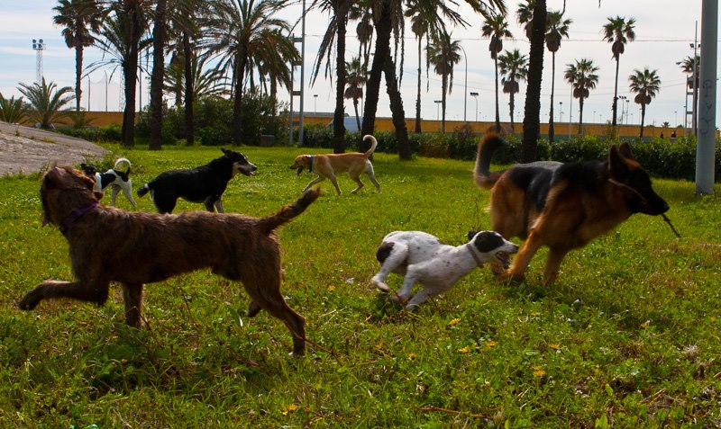 Qué errores cometemos cuando vamos con los perros al parque