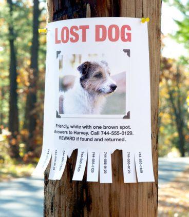 Qué puedes hacer si encuentras un perro abandonado