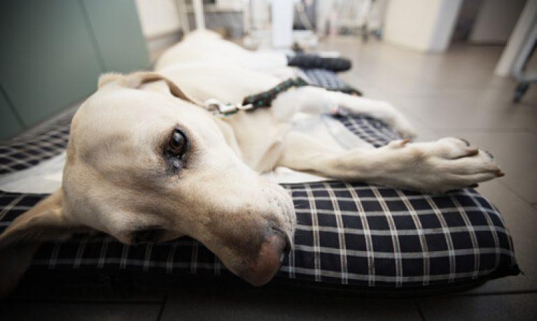 Se abre un centro de donación de sangre para perros en Taiwán