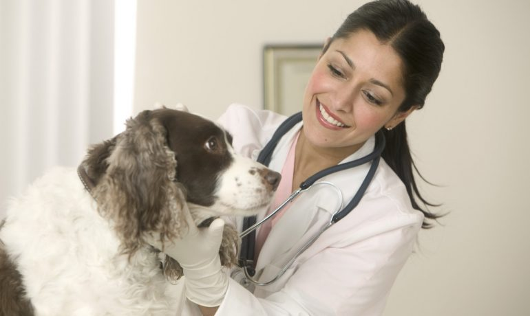 Se puede prevenir el cáncer en perros