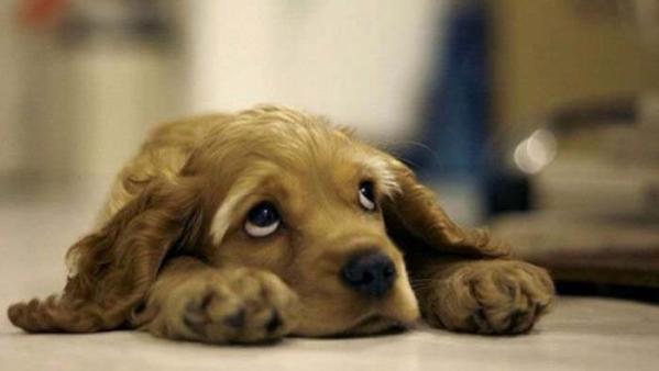 Si el perro no tiene microchip