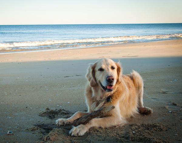 Síntomas de alerta del cáncer en perros