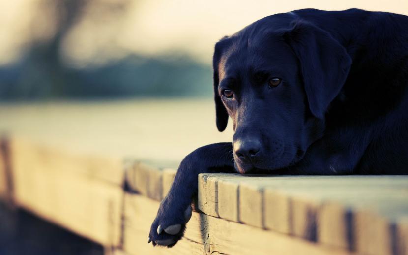 Síntomas para detectar el hipotiroidismo canino