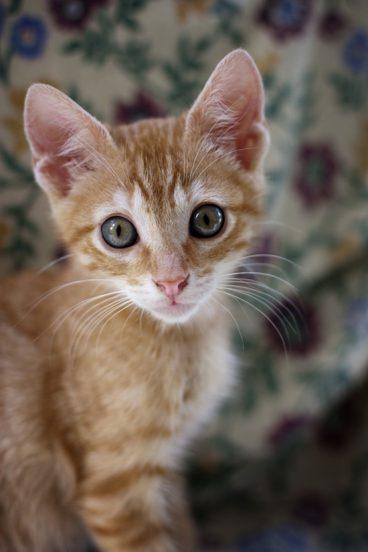 Golosinas felinas archives wakyma - Cual es la mejor freidora ...