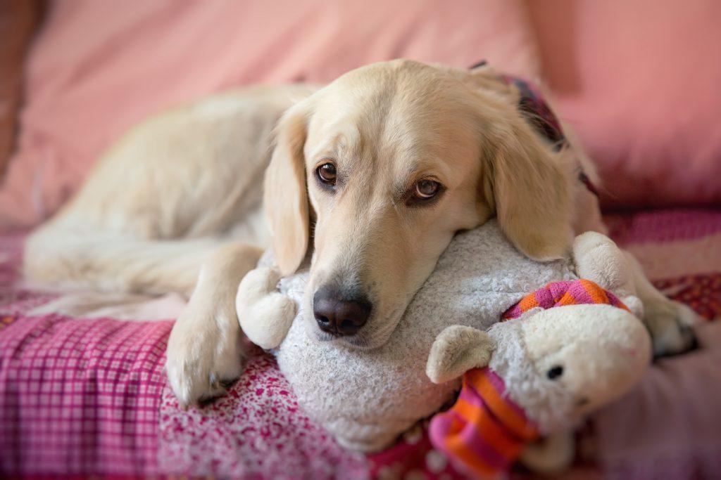 Tipos de insuficiencia renal canina