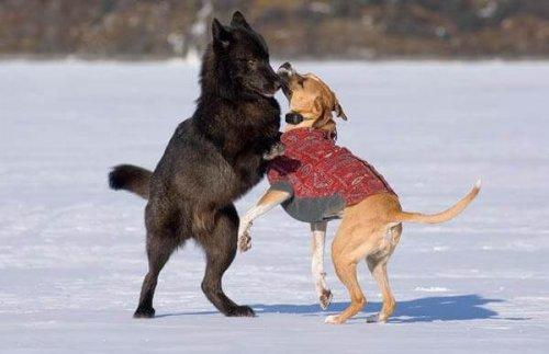 Todos los perros quieren jugar con Romeo
