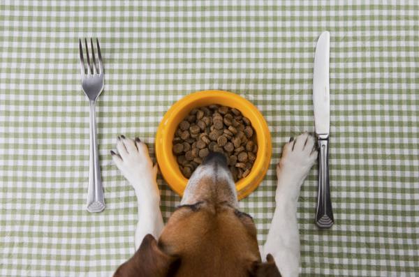 Tratamiento para el hipotiroidismo canino