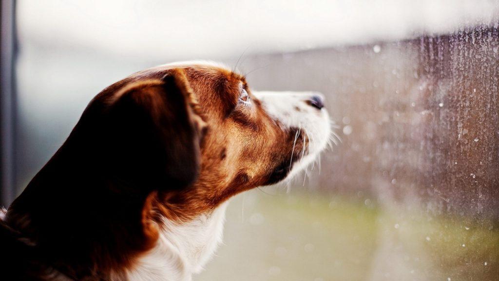 Trucos para pasear al perro los días de lluvia