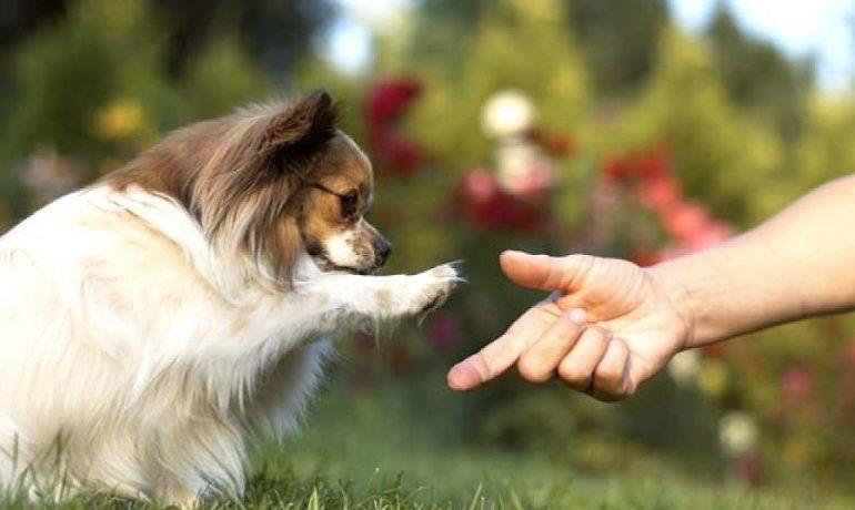 tu perro se acuerda de lo que haces