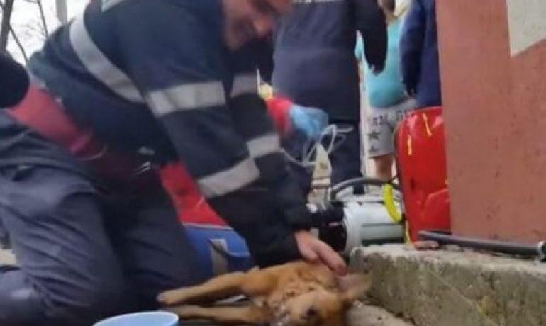 Un bombero consiguió salvar la vida de un perro con respiración boca a boca