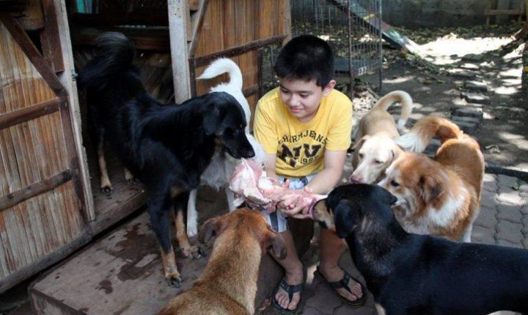 Un niño montó su propio refugio para animales
