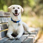 Un perro salva a su dueña de sufrir una violación