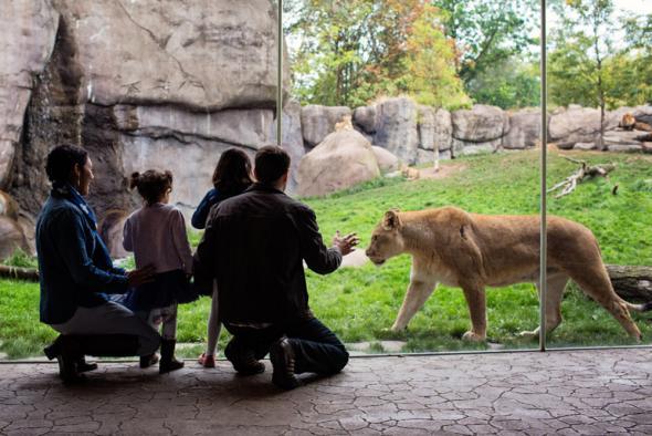zoo virtual con tecnología 7D