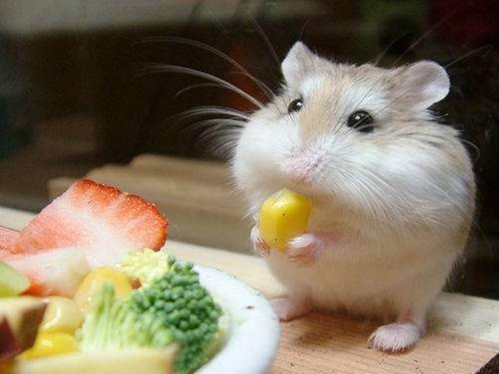 tener a un hamster como mascota