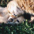 5 Consejos para mejorar la convivencia entre perros y gatos