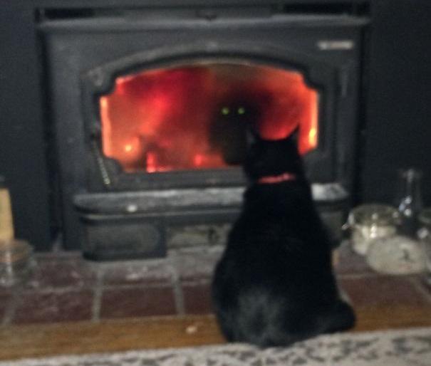 gato invocando demonio