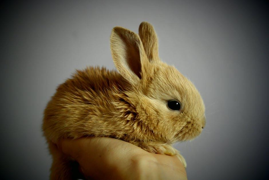 A mi conejo se le cae el pelo