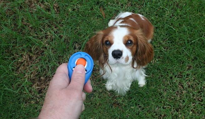 Adiestramiento con clicker