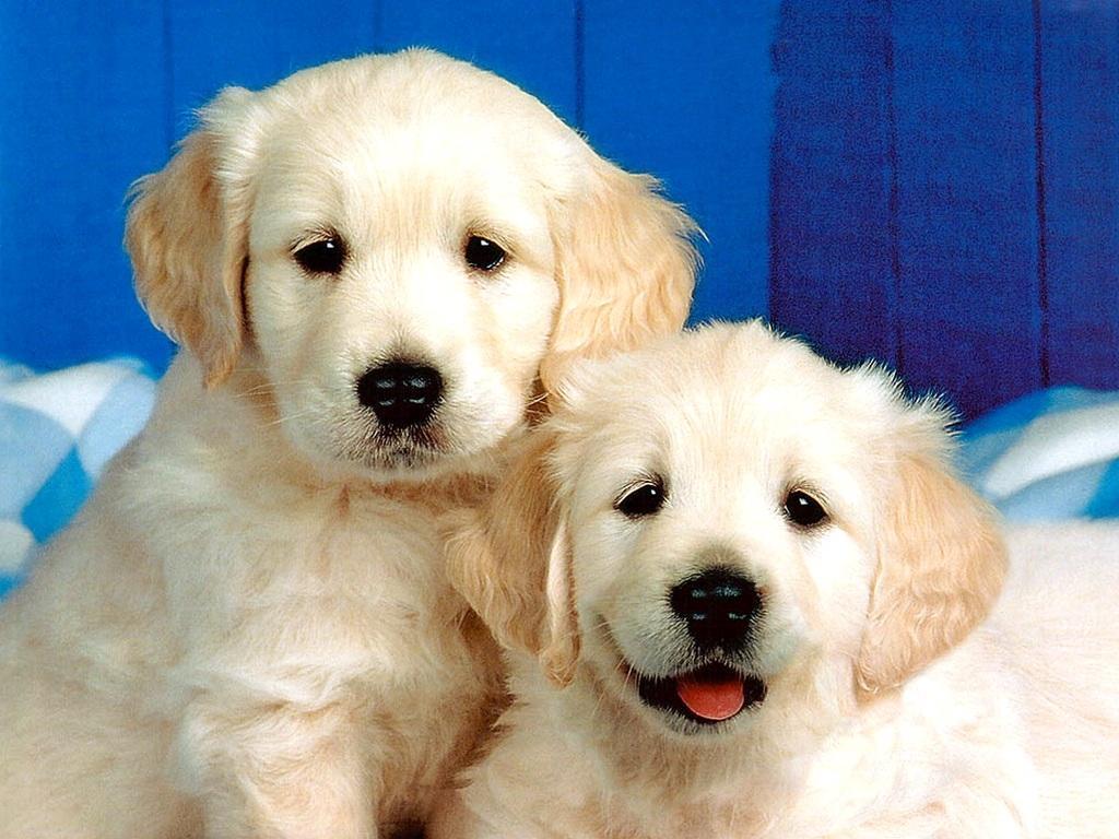 Beneficios de la canela para los perros