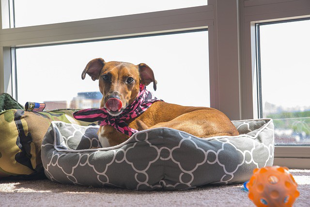 Beneficios de la fibra natural para perros