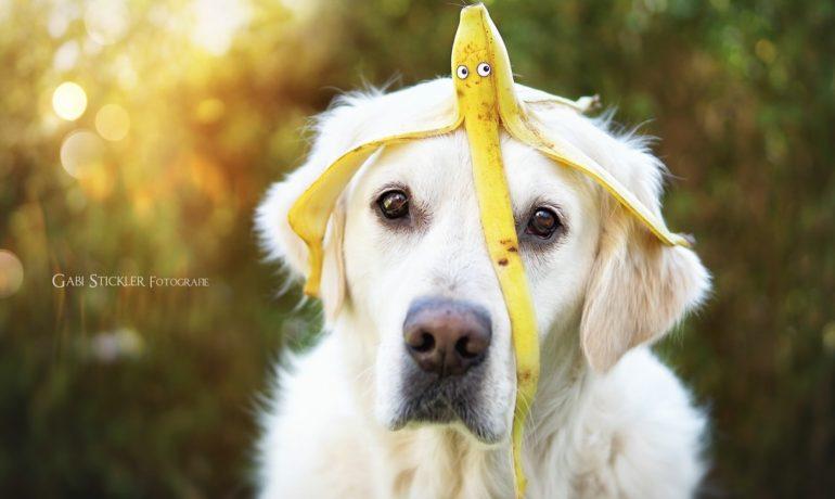 Beneficios de los súper alimentos para perros