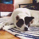 Cáncer de piel en perros