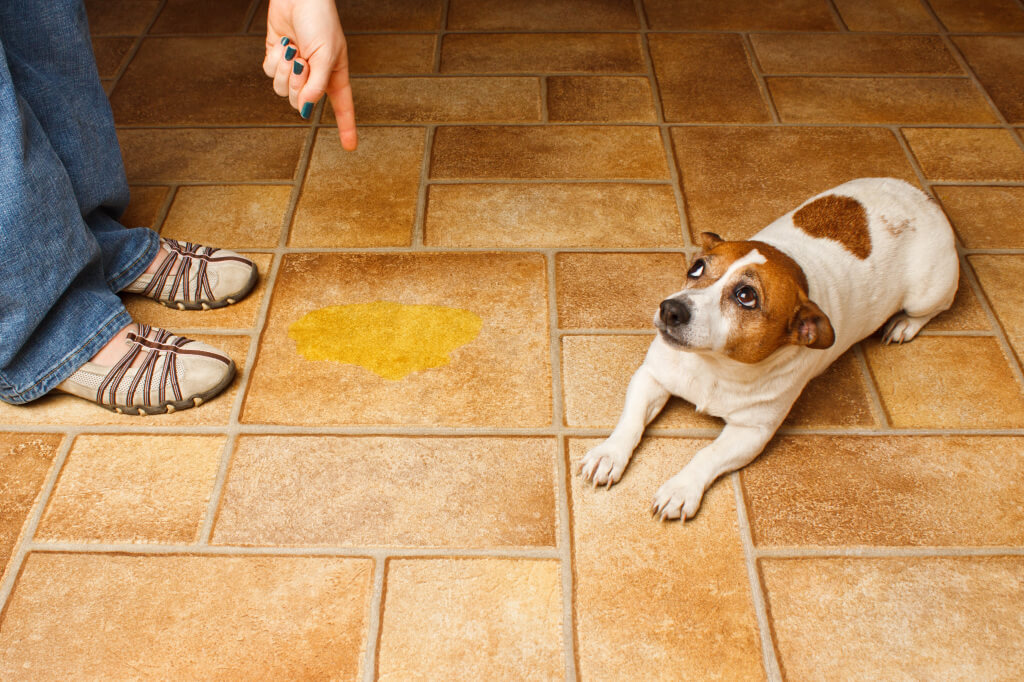 Cómo evitar que los perros orinen en la puerta