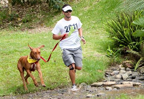 Cómo motivar a un perro para practicar canicross