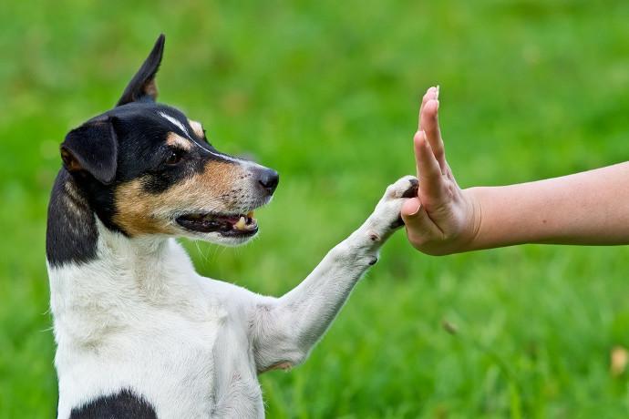Cómo seguir enseñando a un perro anciano