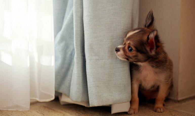 Cómo tratar a un perro miedoso
