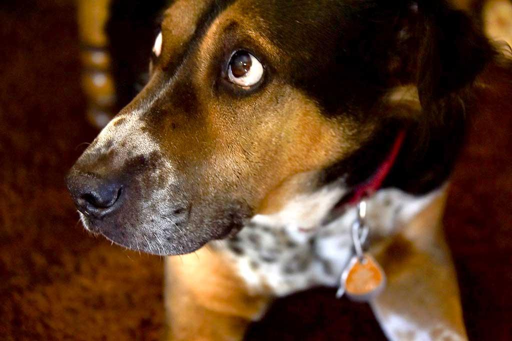 Causas del estrés en perros