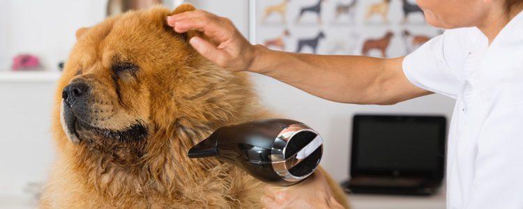 Consejos clave para saber cómo quitar los nudos del pelo de un perro