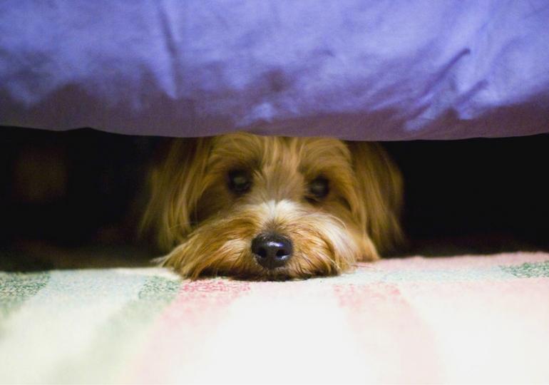 Consejos para conseguir que nuestro perro sea más confiado
