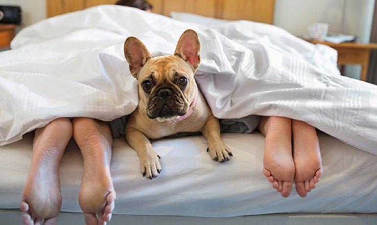 Cosas que debes saber ANTES de dormir con tu perro en la cama
