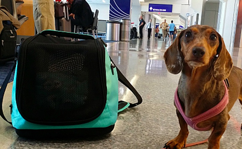 Cuánto cuesta viajar en avión con mascotas