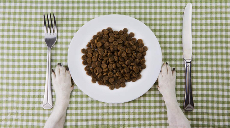 Cuánto debe comer un perro
